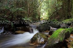 Montezuma Falls Wilderness West Coast, Tasmania  This is one of the many streams criss-crossing the state forest on the hike to Montezuma Falls.  I love the way in which the wet, mossy rocks reflect the subdued afternoon lighting in the rainforest.  It might be my favorite photo I took in Tasmania.