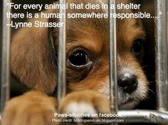 For Every Animal That Dies In A Shelter There Is a Human Somewhere Responsible. Lynne Strasser