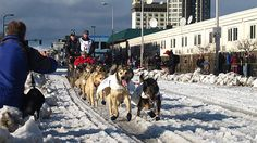 Despite low snowfall in Anchorage and a mild winter across Alaska, the 44th annual Iditarod Trail Sled Dog Race will begin on Saturday.