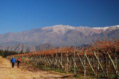 Viñedos Riojanos. Más sobre viajes en www.facebook.com/viajaportupais