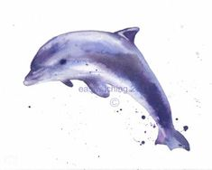 OK! Brushes out! Follow along if you fancy paining this fresh dolphin. I used Saunders Waterford 140lb Hot Pressed High White paper (available from Ken Bromley Art Supplies, UK) for lovely sparkle …