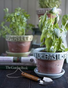 Herb garden for windowsill