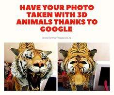 Have your photo taken with 3D animals thanks to Google - Mamma & Bear