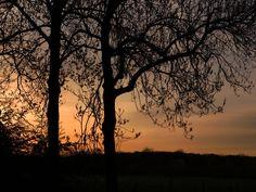 A golden morning in Odijk by zwedendejong