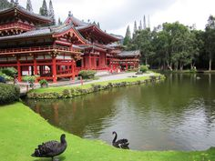 This was a beautiful buddhist  temple in the rainforest in Hawaii
