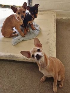 URGENT --PUPPY ALERT--These 6 month old babies are super cute but scared and overwhelmed. Please SHARE, they need some help. Thanks! #A4805106 I'm an approximately 6 month old male chihuahua sh. #A4805105 I'm an approximately 6 month old female terrier #A4801507 I'm an approximately 6 month old male chihuahua sh Carson Shelter, Gardena, CA https://www.facebook.com/171850219654287/photos/pb.171850219654287.-2207520000.1425500360./378546198984687/?type=3&theater