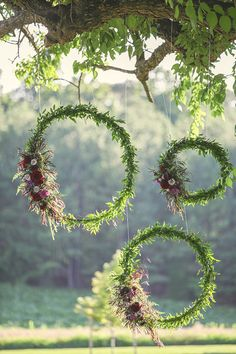Green wreaths suspended from tree branches