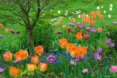 gardening photography - Google Search