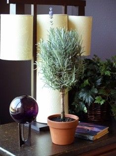 Lavender topiary. Must make!!!!!!!!!!!!