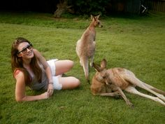 Kangaroos in Brisbane - no not in backyards as some people think - probably at Lone Pine Sanctuary.  Then again I have seen kangaroos in backyards out at Roma - 600 Klms due west of Brisbane.  Come to think of it, a neighbour of mine in Brisbane had a small Joey as a pet.