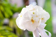 Психологии говорят, что орхидеи привлекают сложных и необычных девушек. Любительниц поговорить о высоком, о том, что жизнь – это такая суета сует, покапризничать, пооригинальничать. Женщины, которые любят орхидеи, не всегда умеют обращать внимание на простые радости (радугу за окном или милого котенка, которые нежится на солнышке).