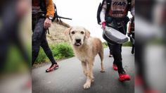 A Swedish Adventure racing team travels to try and win a world title, but comes home with something way better: a stray dog that joined the team for much of the grueling 430-mile race.  Jen Markham has the story.