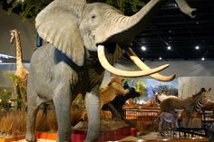 Delbridge Museum of Natural History in Sioux Falls | Visit Sioux Falls