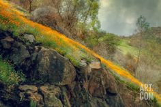 Spring in the Canyon Photographic Print