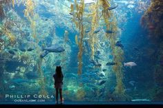 underwater concept city - Google 검색