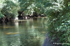 Le Teich, sur les rives de la Leyre