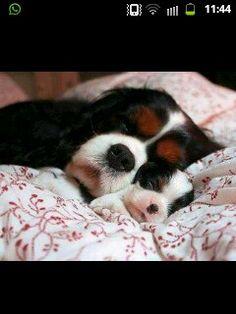Moeder en kind - hond