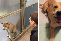 """There are more than a few reasons to choose to adopt your next pet, but these """"before"""" and """"after"""" photos of dogs adopted from shelters on BuzzFeed have truly captured our hearts."""