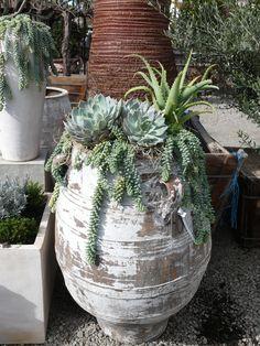 This Antique Greek Pithari creates the perfect planter for this succulent design