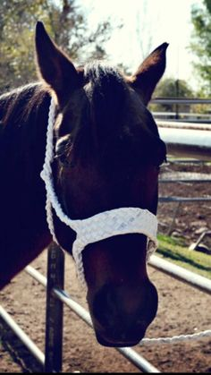 Hand Braided Mule Tape Horse Halter