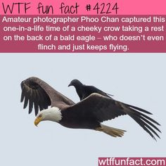 Must be why Ravenclaw's symbol is an eagle