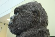 Side profile of the #Squatch. #MCTA