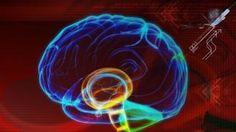 L'intelligenza umana dipende dalla asimmetria del cervello - La Stampa