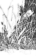 An art demonstration in negative drawing by Mike Sibley. Free online pencil lesson - drawing grass using negative drawing techniques. Drawing Lessons, Drawing Techniques, Drawing Tips, Realistic Pencil Drawings, Art Drawings, What Is Landscape Architecture, Grass Drawing, Watercolor Negative Painting, Landscape Art Lessons