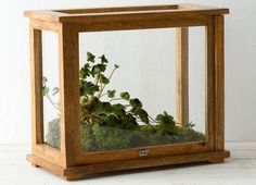 A precursor to the terrarium, Wardian cases were invented in the mid-1800s to transport rare plant specimens. And they had staying power—they're just as useful for protecting your prized plants today. Here's a roundup of 10 of our favorites.