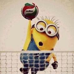 Миньон волейбол