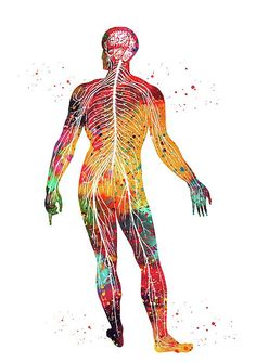Would we be better able to manipulate the shapes and patterns of energy outside of ourselves? Nerve Structure, Parotid Gland, Textile Courses, Systems Art, Human Body Anatomy, Medical Art, Mural Wall Art, Anatomy Art, Anatomy And Physiology