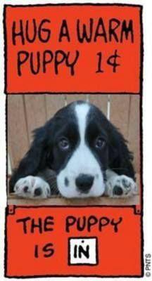 Hug a warm puppy! Springer Dog, Springer Spaniel Puppies, English Springer Spaniel, Cocker Spaniel, I Love Dogs, Puppy Love, Dogs And Puppies, Doggies, Family Dogs