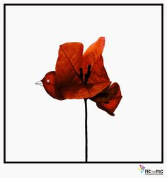 Pic to Pic: The flying flower. #flower #pictopic #illustration #photography #visualpoetry #poetry #fly #minimal #red #pajaro #bird #ilustracion #fotografia