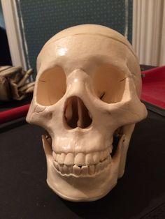 Skull, Art, Art Background, Kunst, Gcse Art, Sugar Skull, Art Education Resources, Artworks
