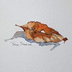 A Simple Farmhouse and Shed in Line and Wash Watercolor Watercolor Leaves, Watercolor And Ink, Watercolour Painting, Painting & Drawing, Watercolors, Leaf Drawing, Leaf Art, Watercolor Techniques, Painting Inspiration