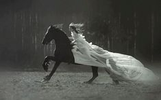 Read Princesas from the story Imagens by (Júlia Andrady) with reads. Queen Aesthetic, Princess Aesthetic, Book Aesthetic, Aesthetic Pictures, Horse Girl Photography, Fantasy Photography, Equine Photography, Photography Poses, Foto Cartoon