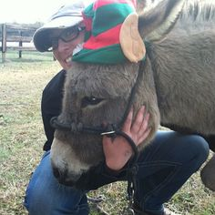 #christmas #donkeys #hopethruhorses  #eagala  #elves