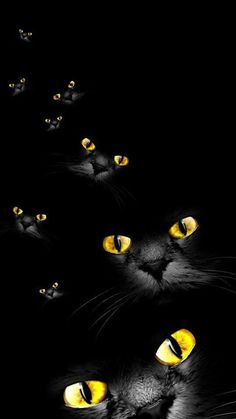 Love my own jet black kitty! Nothing more exotic than a black cat with great big golden eyes!