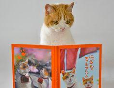 Twitter / nyalan_jalan: にゃんと!発売中の関東東北・東海・関西中国四国・九州じゃらんには、 思い出がびっしり詰まった 『にゃらん写真集』が付いてるにょです! 80ページでハードカバーにゃ〜!!!