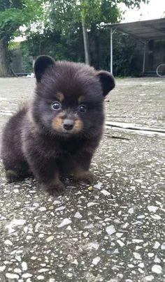 Sød lille Bjørn