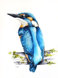 ARTFINDER:  Kingfisher (Alcedo atthis) bird, bir... by Karolina Kijak -  Original watercolors of Kingfisher (Alcedo atthis) Paper 300g  100% cotton, high quality pigments size 23x31cm  Follow me on facebook: https://www.faceb...
