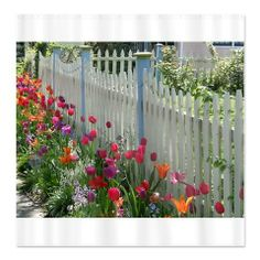 #sold @Cafe Press #tulips #garden along #whitepicketfence #photo on #showercurtain at http://www.cafepress.com/+tulips_along_white_picket_fence_shower_curtain,1026959292 - someone is thinking #Spring #2014 :D