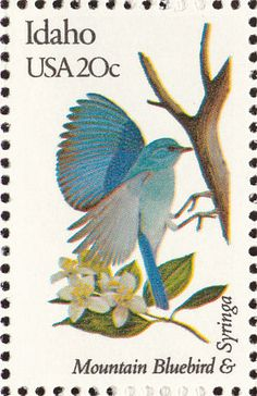 Mountain Bluebird stamps - mainly images - gallery format