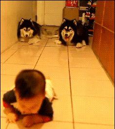#DogsLove #DogsAreTheBest #DogsAreLove http://www.amazon.com/Dog-Brush-DeShedding-Tool-DOCTOR/dp/B00EZE6BZK/ie=UTF8?m=A2RF1CHABDH4JGkeywords=shedding+comb