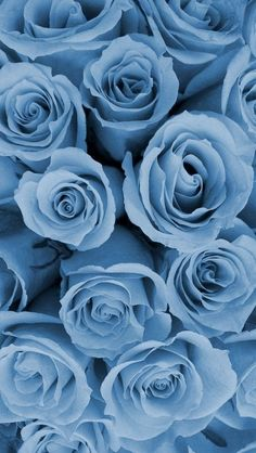 blue roses😊  on We Heart It
