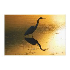 Egret Sunset Wrapped Canvas Print