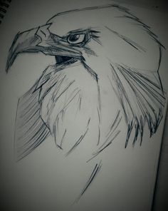 Quick Sketch of an Eagle