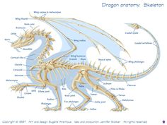 Dragon anatomy: Dragon anatomy - skeleton     Because sometimes one needs to look at a diagram of a dragon's skeleton when writing one's story