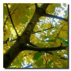 un giardino in diretta: Giallo ciliegio #giardinoindiretta