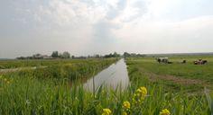 Zuid-Holland, The Netherlands. De Zuidplaspolder is een overwegend agrarisch gebied dat ligt in de driehoek Rotterdam – Zoetermeer – Gouda (RZG), aan de Oostflank van de Zuidvleugel van de Randstad. Sinds 2002 werkt de provincie Zuid-Holland er samen met andere partijen aan grootschalige gebiedsontwikkeling. De Zuidplaspolder wordt een productie- en genietingslandschap dat de overgang markeert tussen stedelijk en landelijk gebied.